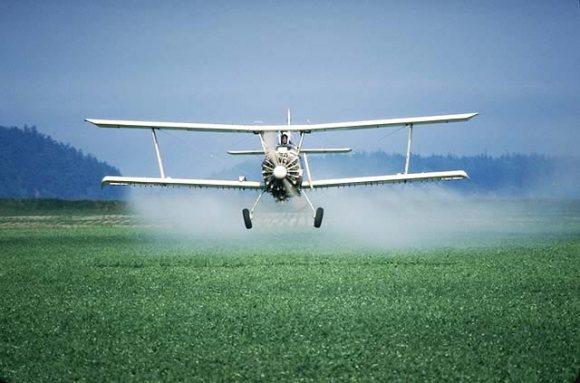 pestici1
